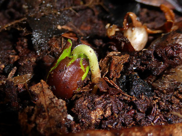 TYPES OF GERMINATION